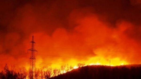 О лесных пожарах в Воронежской области спасателям будут сообщать компьютеры