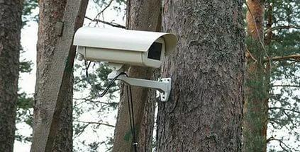 камера лесной дозор